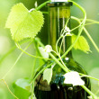 Stock Photo: Bottle Of Wine And Grape Leaves