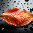 Autumn Leaf — Stock Photo #10680431