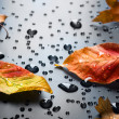 Stock Photo: Autumn Concept