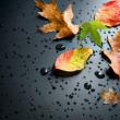 höstens koncept — Stockfoto