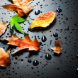 Stock Photo: Autumn Leaves Over Black