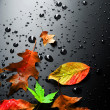 Wet Bright Autumn Leaves — Stock Photo