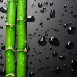 Bamboo — Stock Photo #10680459