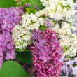 Stock Photo: Beautiful Lilac Flowers Background