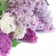 Stock Photo: Beautiful Lilac Flowers Border