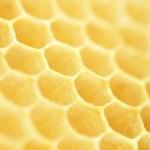 Honeycomb. Shallow DOF — Stock Photo