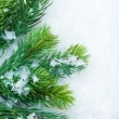 Stock Photo: Christmas Fir Tree over Snow. Winter Background