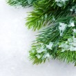 Christmas Tree over Snow.Winter Background — Stock fotografie