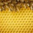 Honey Bees Border - Stock Photo