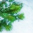 Christmas Tree over Snow. Winter Background — Stock Photo #10680826