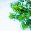 Stock Photo: Christmas Tree over Snow. Winter Background