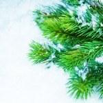 Christmas Tree over Snow. Winter Background — Stock Photo