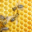 Worker Bees On Honeycomb — Foto de Stock   #10680850