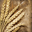 Wheat Ears on the Wood Background - Foto de Stock