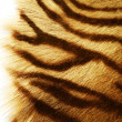 Tiger Skin Over White — Foto Stock