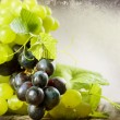 Bunch Of Grape. Vintage Styled. With Copy-space — Stock Photo