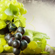 Bunch Of Grape. Vintage Styled. With Copy-space — Stok fotoğraf