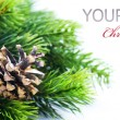 Stock Photo: Christmas Tree Border