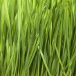 green gras — Stockfoto #10682520