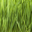 Green Grass — Stock Photo #10682520