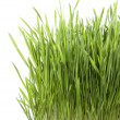 Green Grass — Stock Photo #10682564