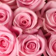 Pink Roses Background — Stock Photo #10682604