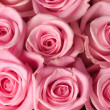 Stock Photo: Pink Roses Background