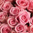 Stock Photo: Beautiful Roses Background