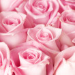 Roses Background — Stock Photo #10682618