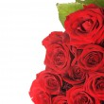 Big Roses Bouquet — Stock Photo
