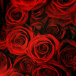Red Roses Background — Stock Photo #10682664