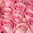 Roses Background — Stock Photo #10682746