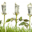 Financial Growth. Conceptual Image - Stock Photo