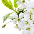 Spring Blossom — Stock Photo #10683265