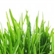 Fresh Grass Over White. With Water Drops — Stock Photo