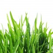 Fresh Grass — Stock Photo #10683368