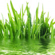 Stock Photo: Fresh Grass