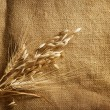 Stock Photo: Wheat Ears border on Burlap background. with copy-space