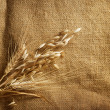 Wheat Ears border on Burlap background. with copy-space — Stock Photo #10683552