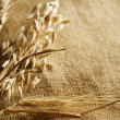 Wheat Ears border on Burlap background. with copy-space — Stock fotografie