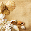 Seashells On The Sand — Stock Photo #10683707