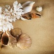 Sea Shells Frame — Stock Photo
