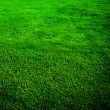 Beautiful Grass Background — Stock Photo #10683975