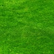 Beautiful Grass Background — Stock Photo