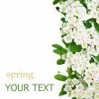 Stock Photo: Spring Flowers Border