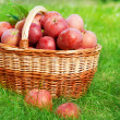 Fresh Organic Apples in the Basket — Stock Photo