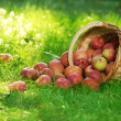 Stock Photo: Organic Apples in Basket