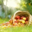 Healthy Organic Apples in the Basket — Stock Photo #10684649