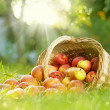 Stock Photo: Healthy Organic Apples in the Basket