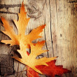 Autumn Leaves over wooden backgound — Stock Photo